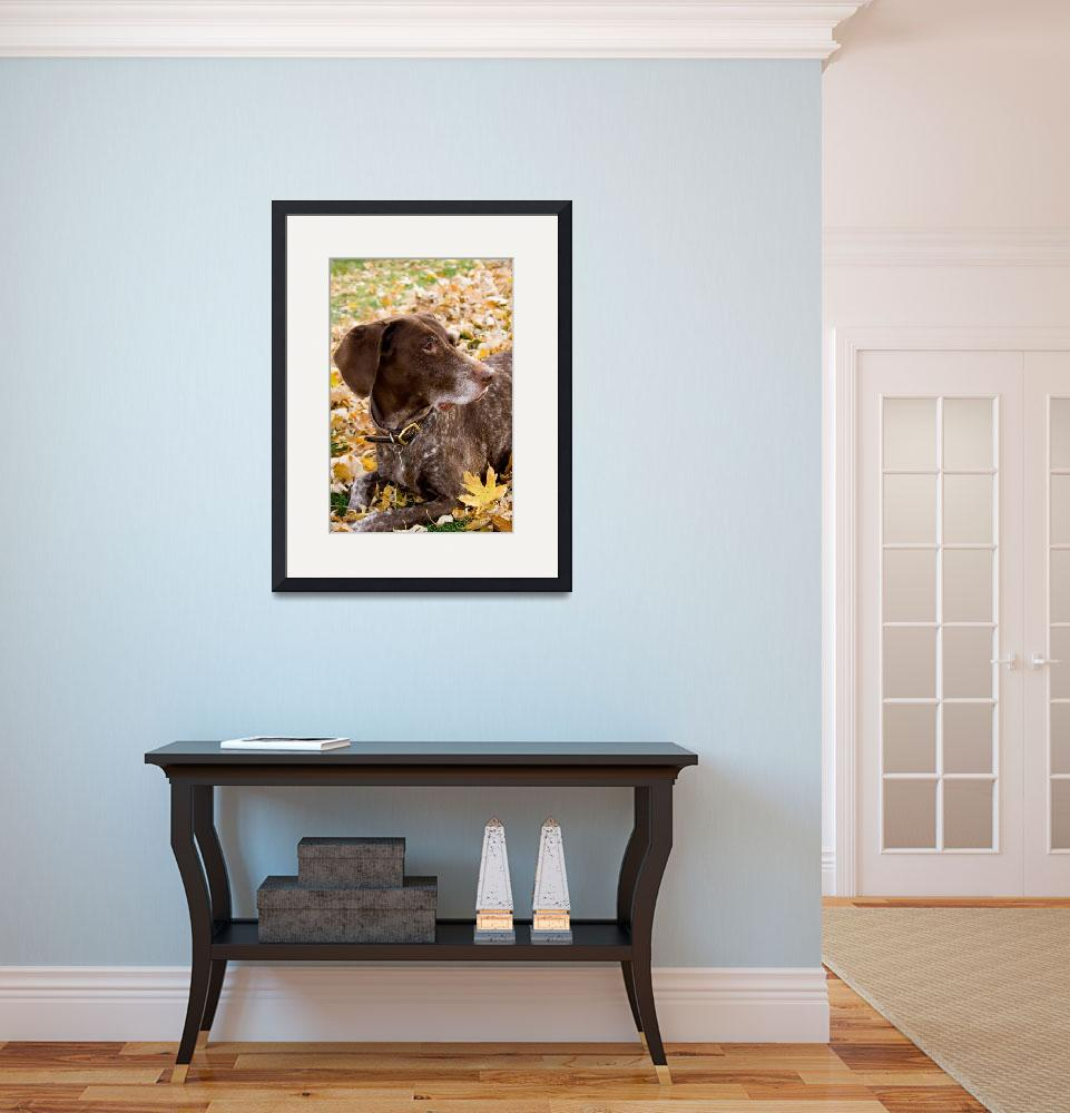 """German Shorthair Pointer&quot  (2008) by photosbysmith"