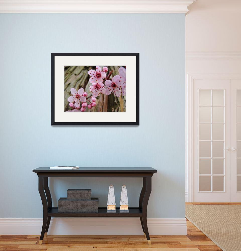 """BLOSSOMS Spring 14 Pink Tree Blossoms Art Prints&quot  (2009) by BasleeTroutman"