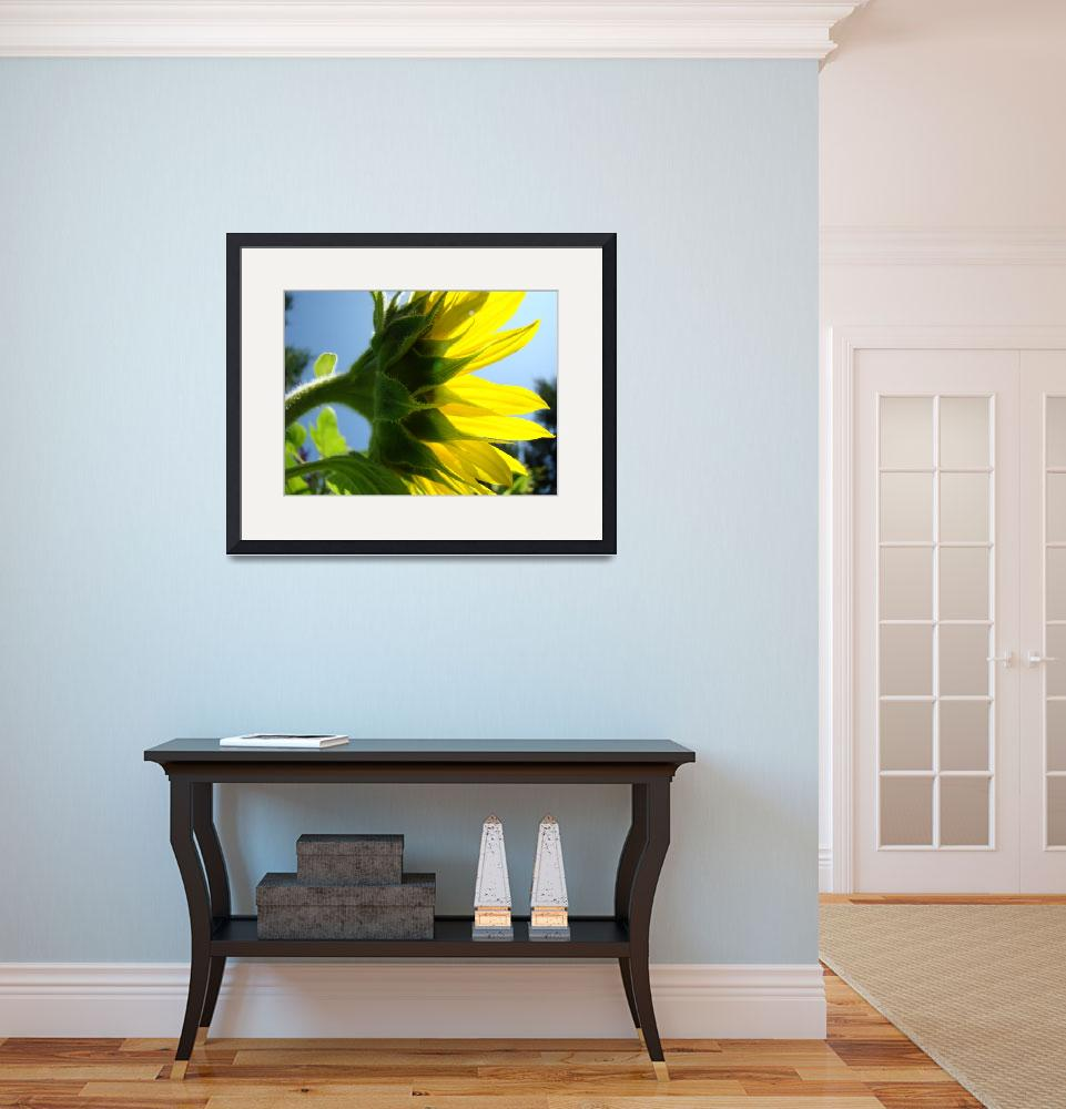 """Bright Sunlit Yellow Sunflower art prints&quot  (2011) by BasleeTroutman"