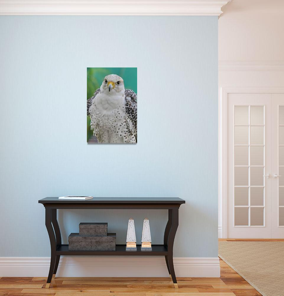 """Gyrfalcon&quot  (2014) by DBenoit"