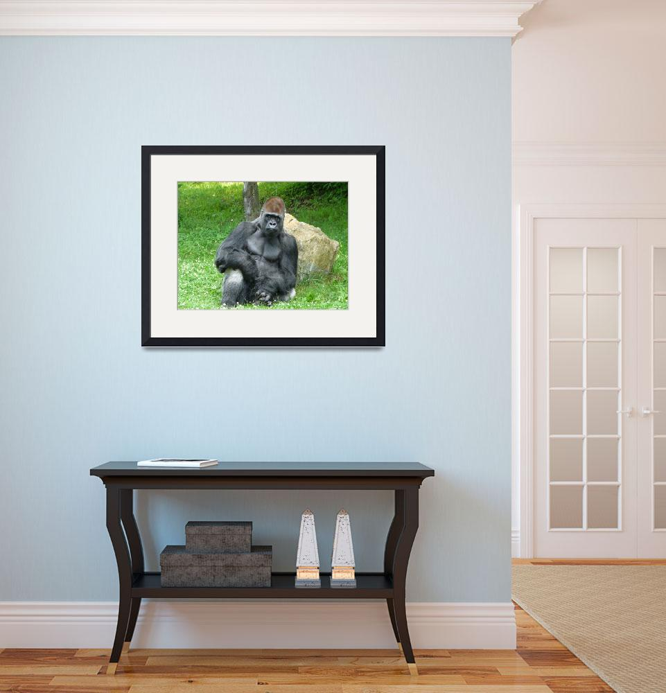 """Gorilla&quot  (2009) by MLYphotography"