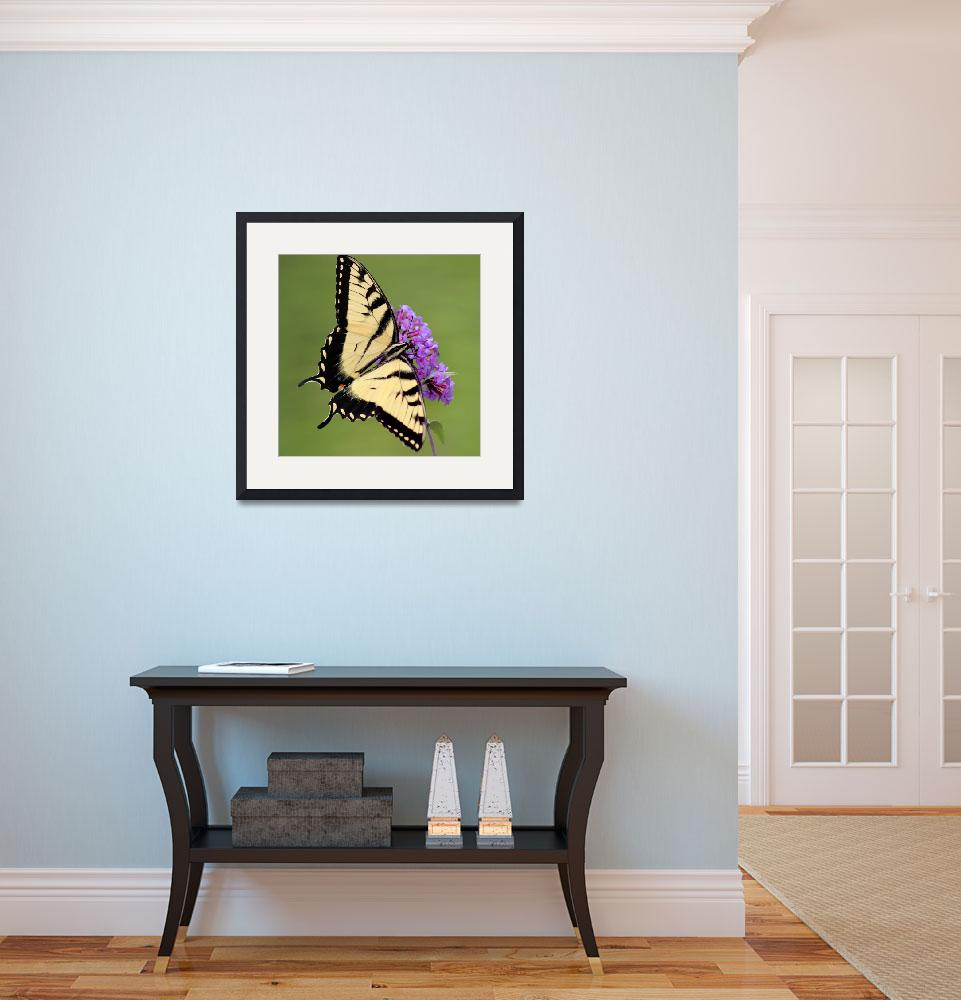 """Eastern Tiger Swallowtail Green Square 2016&quot  (2016) by KsWorldArt"