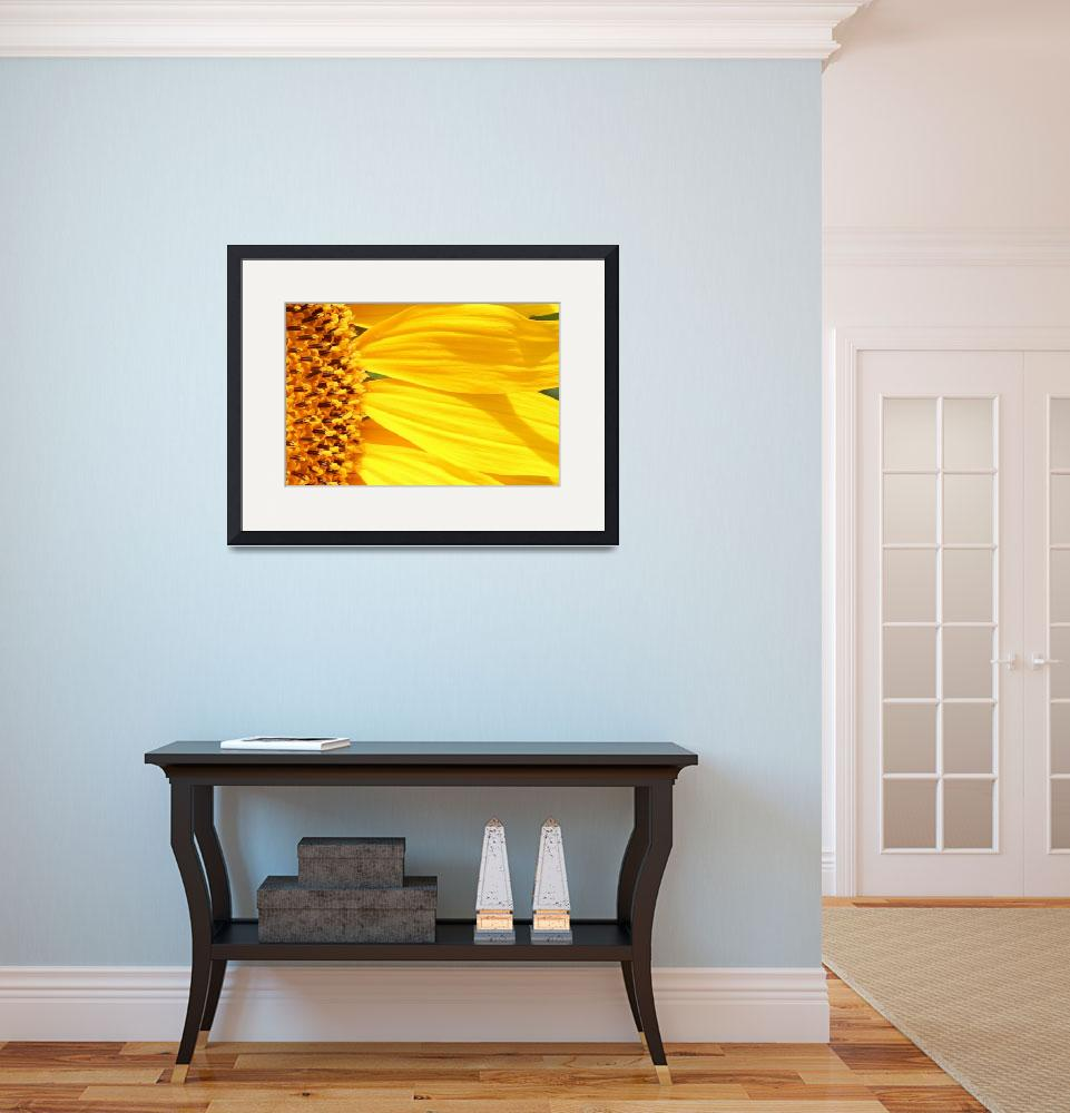 """Sunflower Yellow&quot  (2012) by bettynorthcutt"