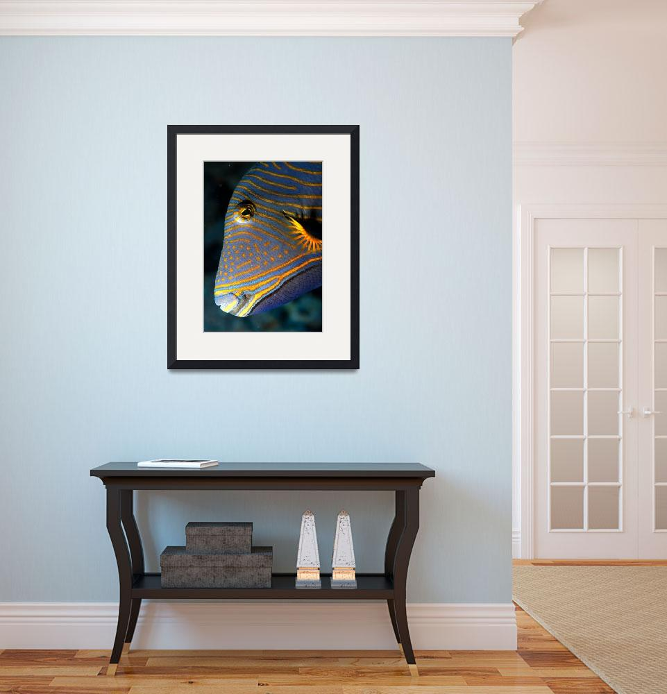 """Triggerfish Portrait&quot  (2005) by JoaoPonces"