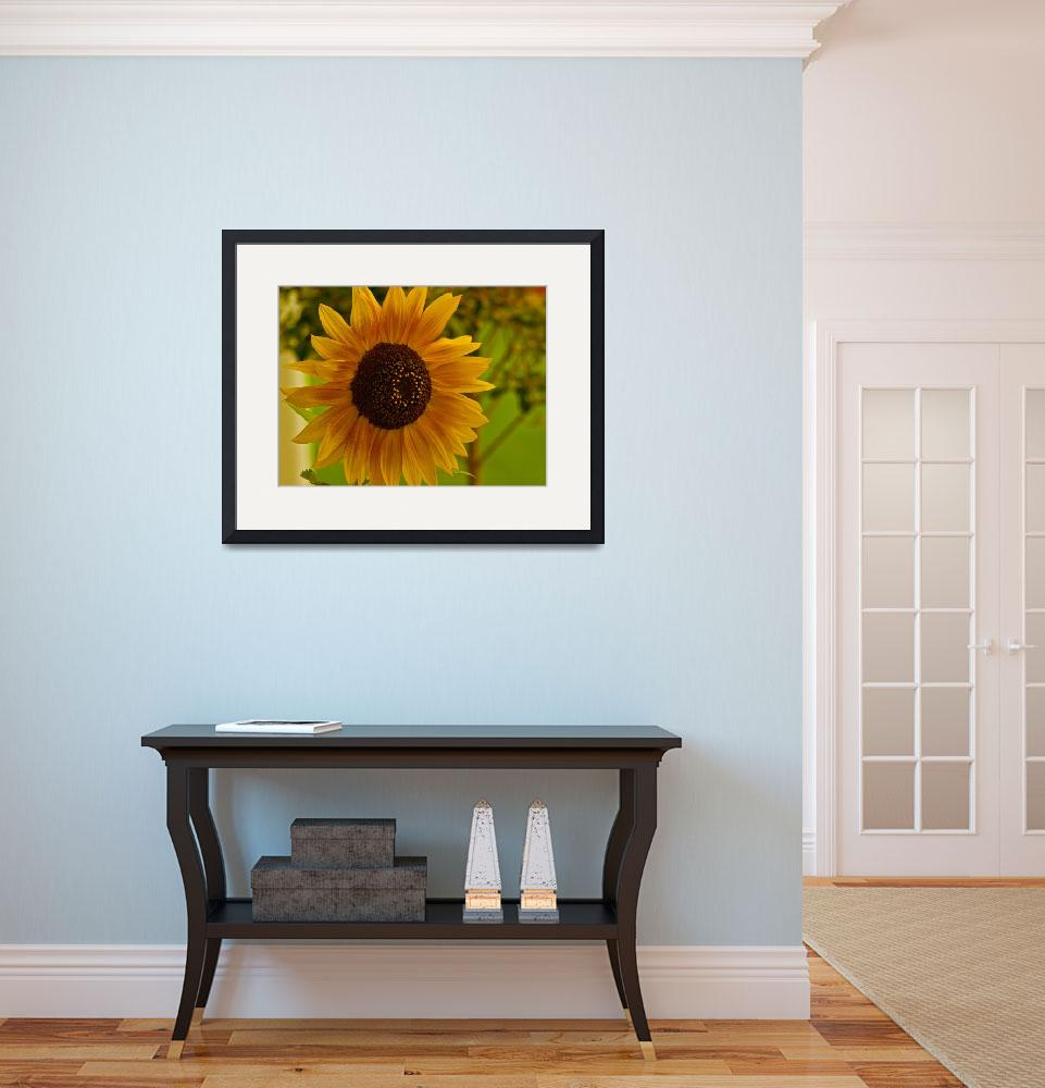 """Oregon Sunflower&quot  (2007) by Mac"