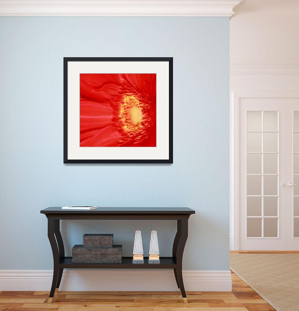 """Red Gerbera Daisy&quot  (2009) by rayjacque"