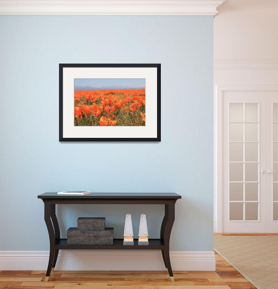 """Poppies 2 2010&quot  (2010) by raskoff"