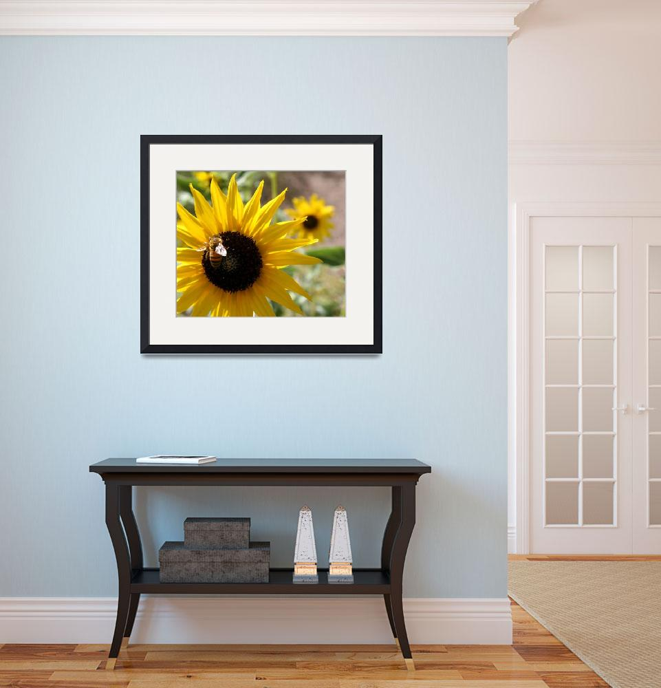 """Sunflower&quot  (2008) by cabralmk"