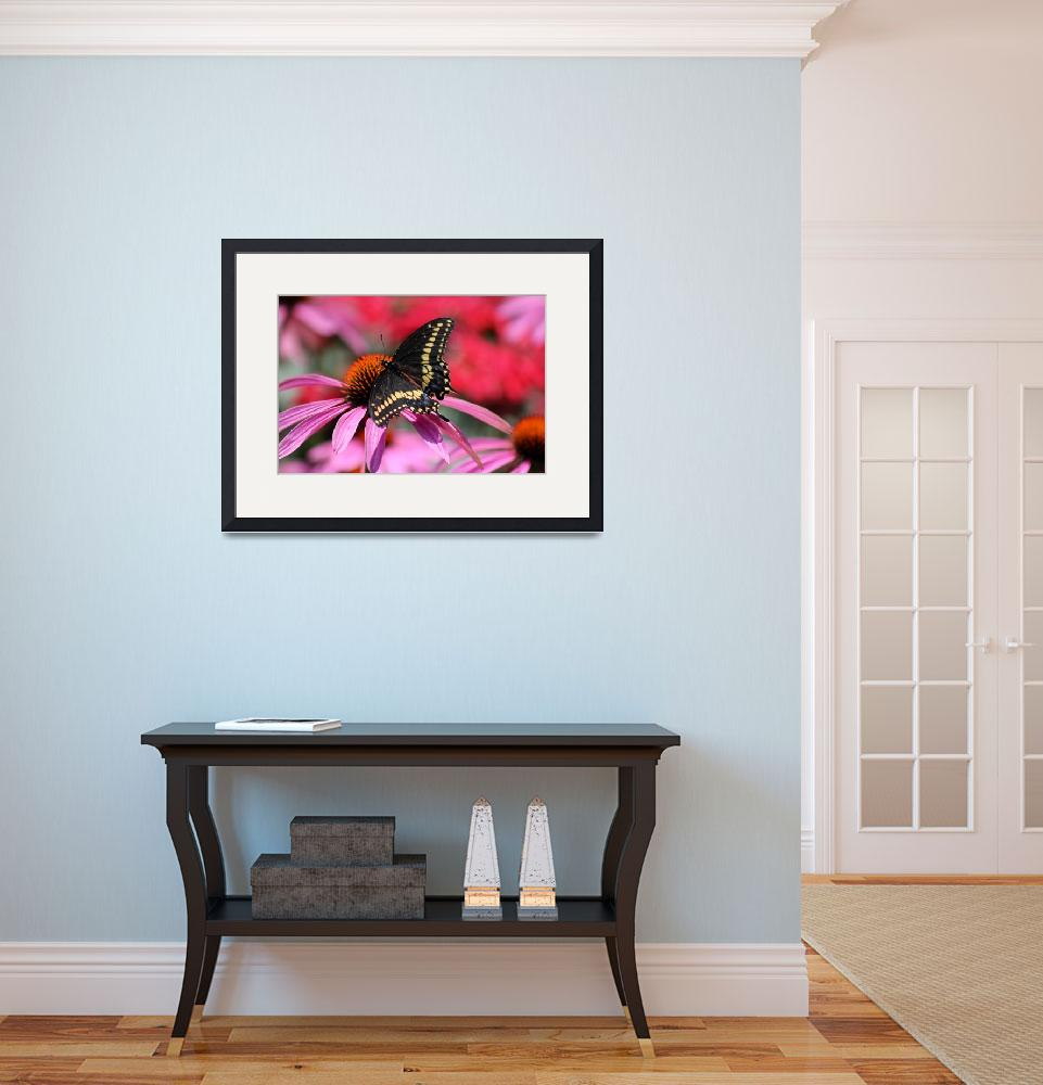 """Black Swallowtail Butterfly on Purple Coneflower&quot  (2015) by KsWorldArt"