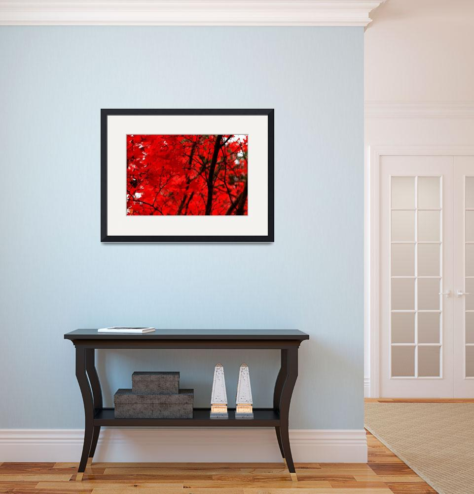 """Red Maple&quot  (2010) by PennyHaviland"