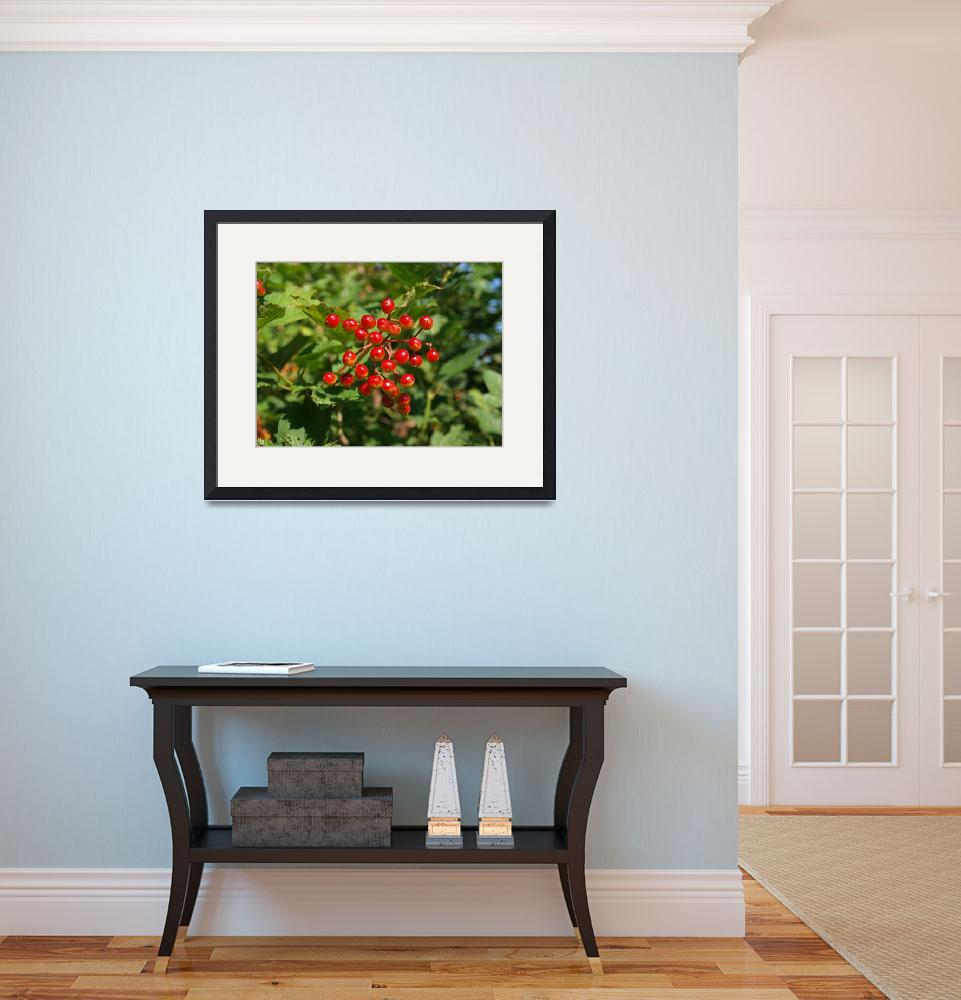 """red berries to brighten your room&quot  (2009) by Albertphoto"