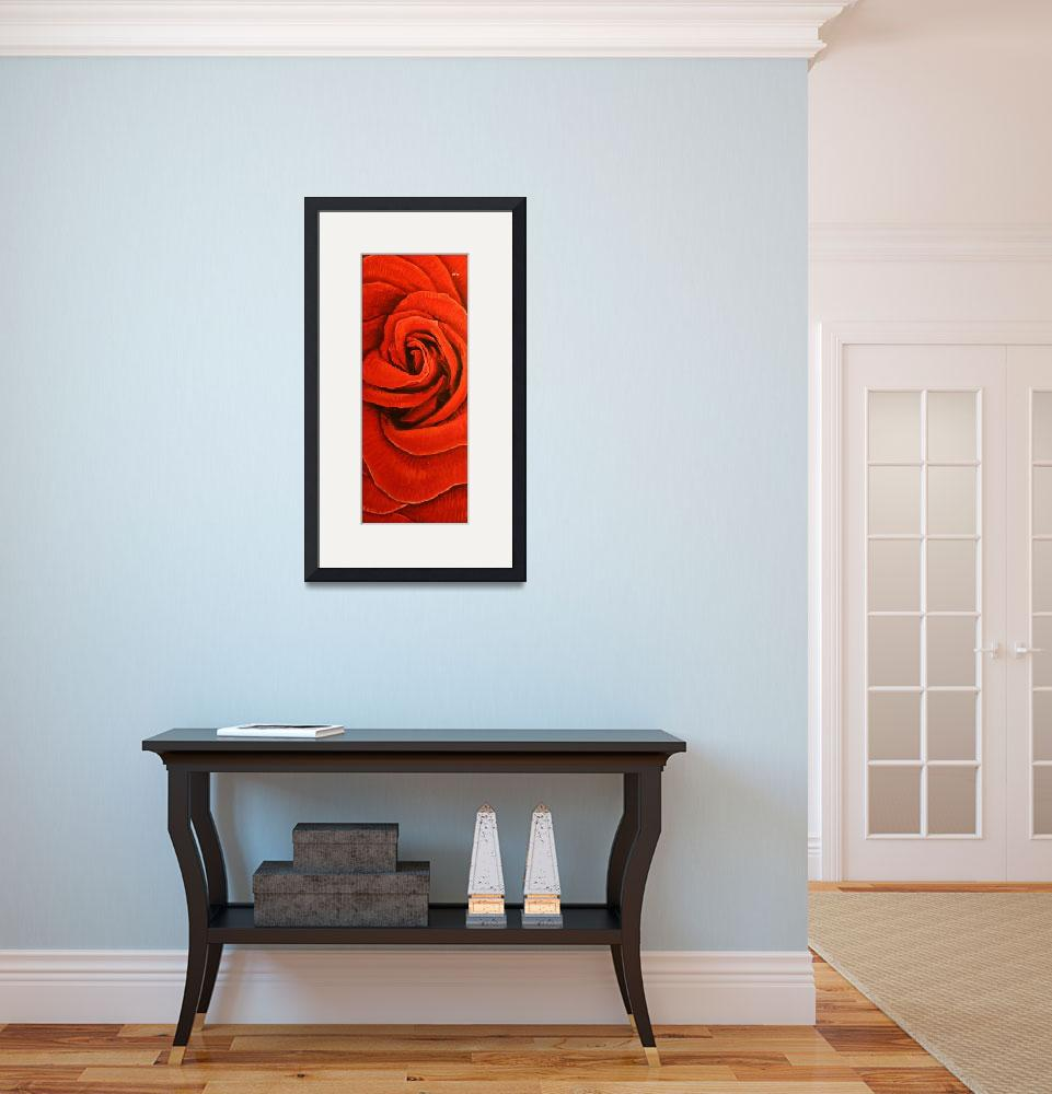 """Long Rose&quot  (2012) by IanLeeOliver"