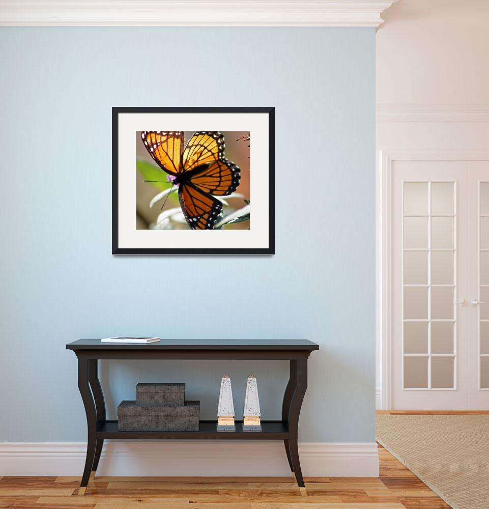 """Butterfly  Viceroy Square&quot  (2011) by KsWorldArt"