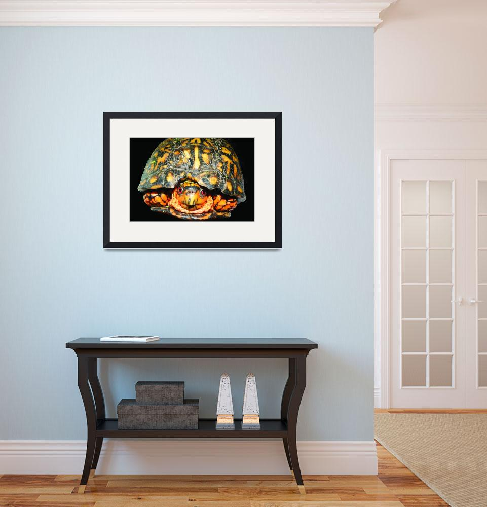 """A Box Turtle Hello&quot  (2009) by Kimmary"
