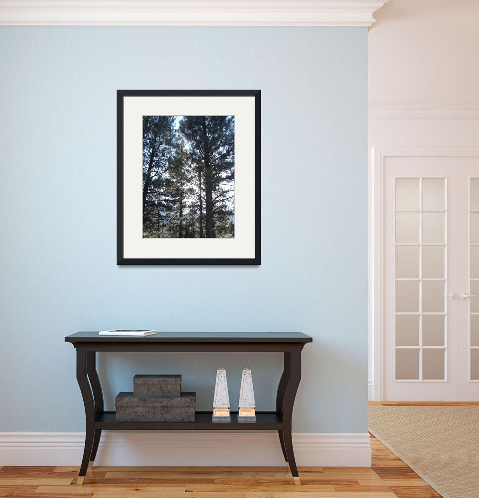 """Ponderosa Pine Trees&quot  (2006) by BuyArt"