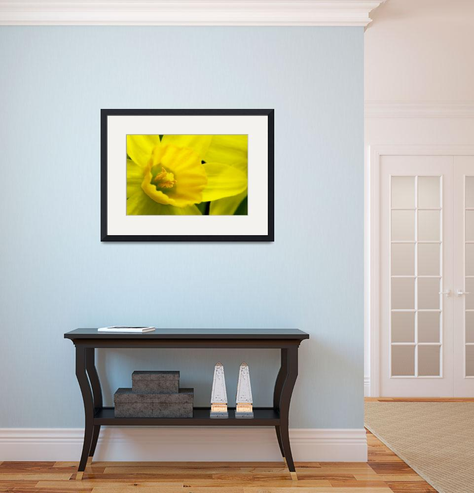 """Miniature Daffodil&quot  (2007) by brianauer"