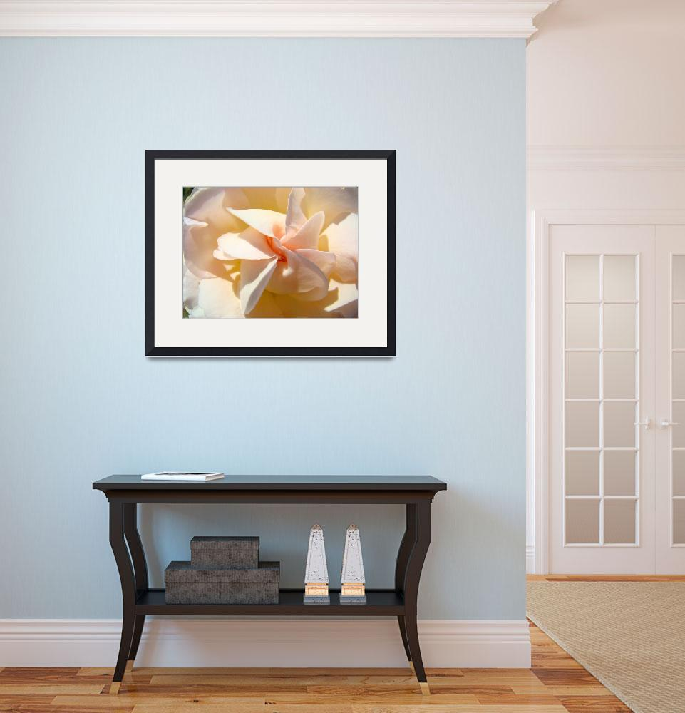 """Rose Flower Spiral art print Pastel Peach Roses&quot  (2010) by BasleeTroutman"