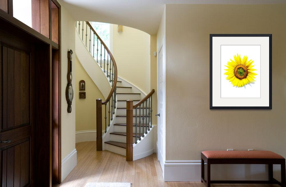 """sunflower-ik24x32&quot  (2008) by swirlingmist"