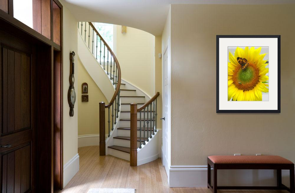 """Sharing a Sunflower&quot  (2009) by DuffyPhoto"
