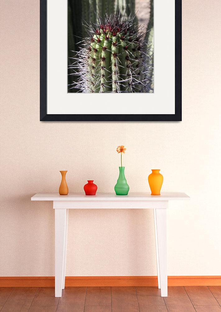 """Cactus Spikes&quot  (2010) by driftingimages"