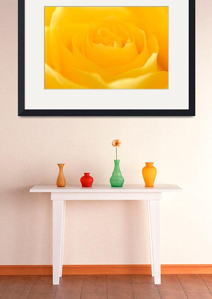 """Yellow Rose&quot  (2008) by dennissmithphotographic"