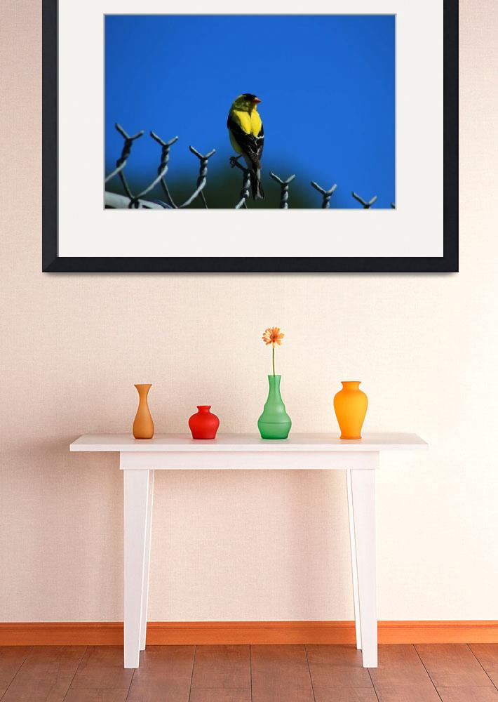 """American Goldfinch on a Fence&quot  (2015) by rhamm"
