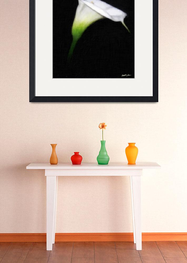 """Elegant Calla Lily Flowers 2 Painterly&quot  (2011) by ChristopherInMexico"