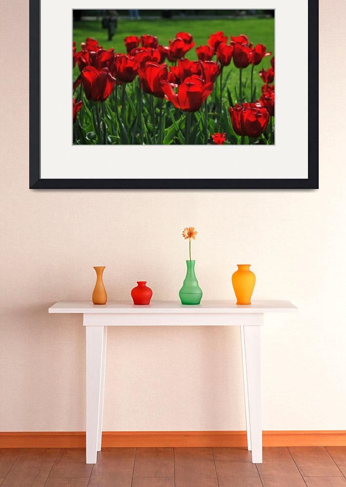 """Bed of Red Tulips&quot  (2010) by LauraD"