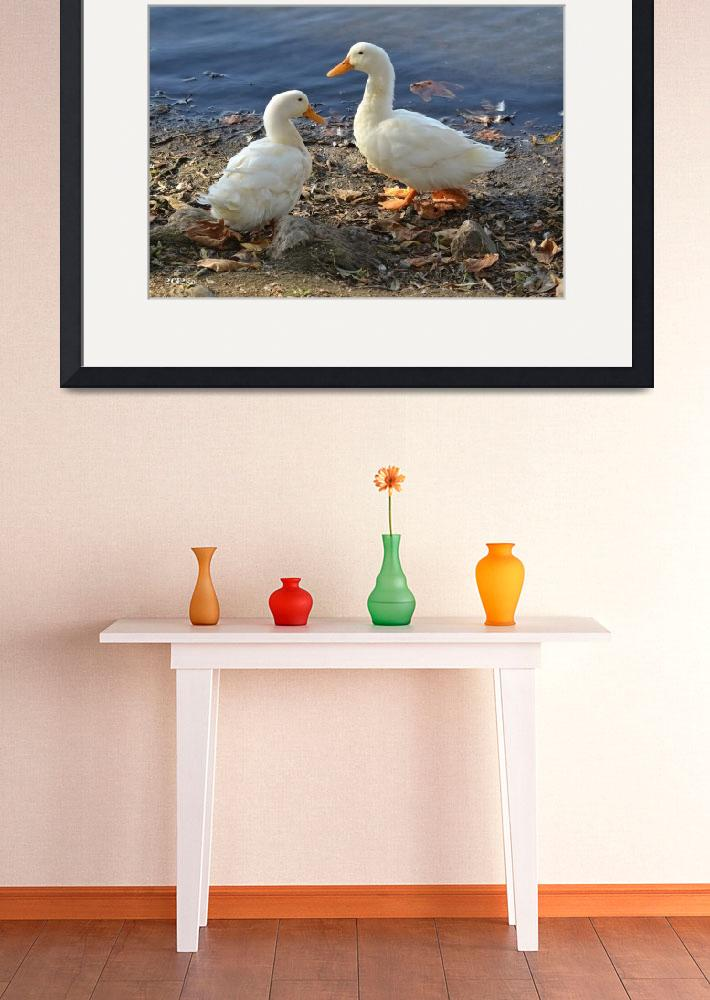 """Two White Ducks Sharing a Moment&quot  (2012) by theblueplanet"