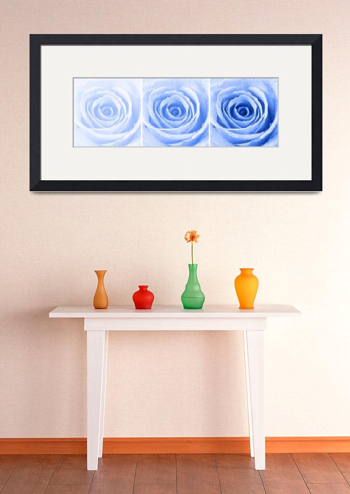 """Blue Rose with Water Droplets Triptych&quot  (2012) by NatalieKinnear"