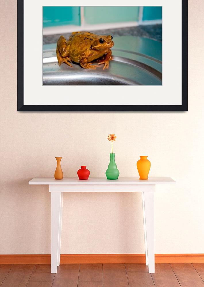 """Frog in my kitchen&quot  by tolkien"