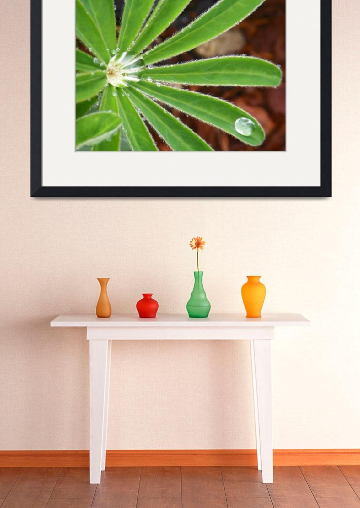 """Botanical - Beautiful Raindrops - Outdoors Floral&quot  by artsandi"