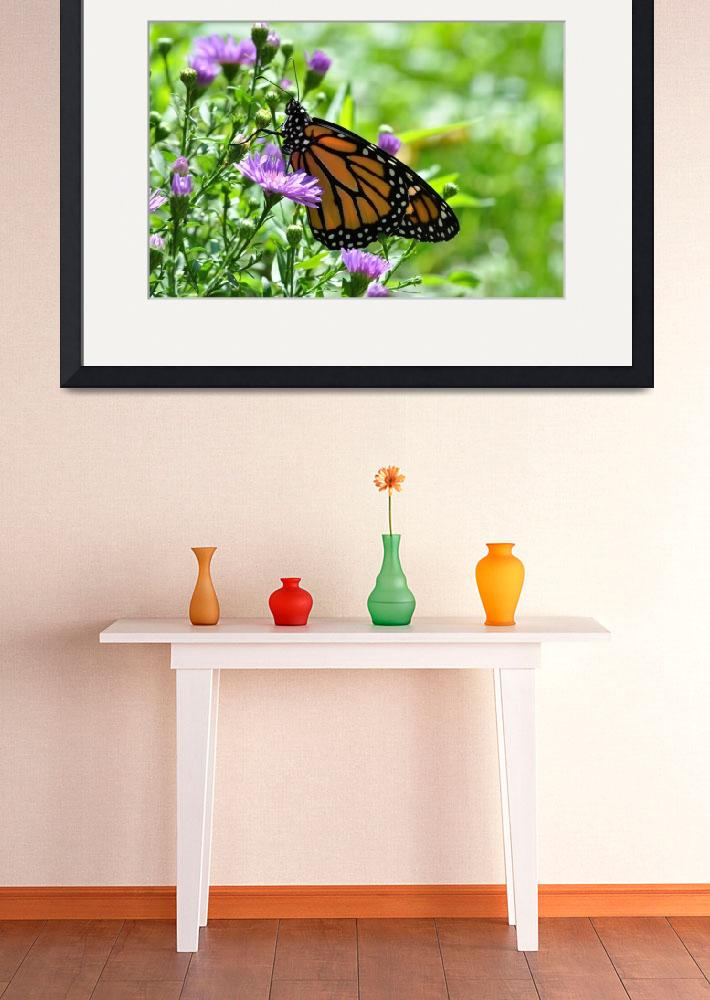 """Monarch Butterfly & Purple Asters No2&quot  (2009) by evansonart"