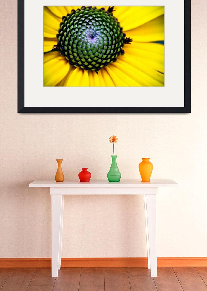 """YELLOW BLOSSOM OF THE GOLDSTURM BLACK EYED SUSAN&quot  (2010) by photographybyryankelly"