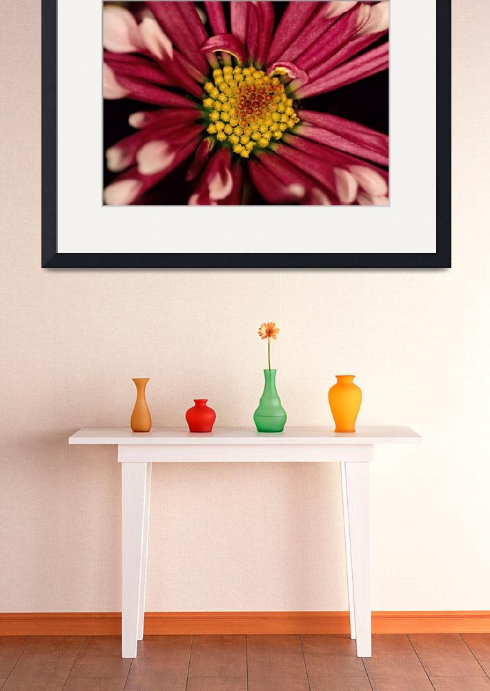 """Red Chrysanthemum Flower&quot  (2007) by kphotos"