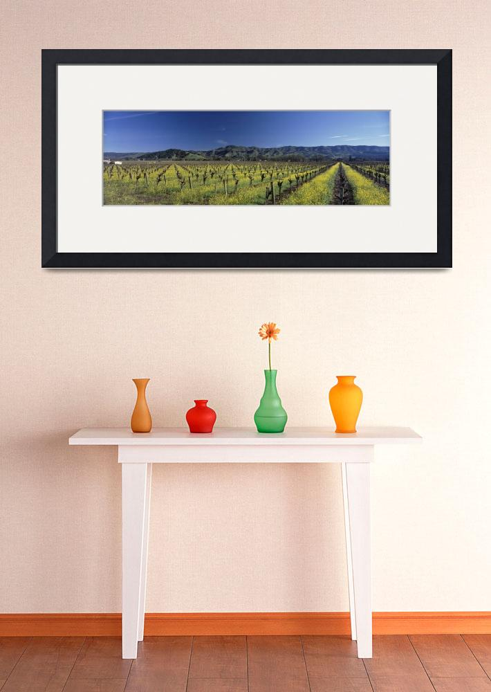 """Mustard crop in a field near St. Helena&quot  by Panoramic_Images"