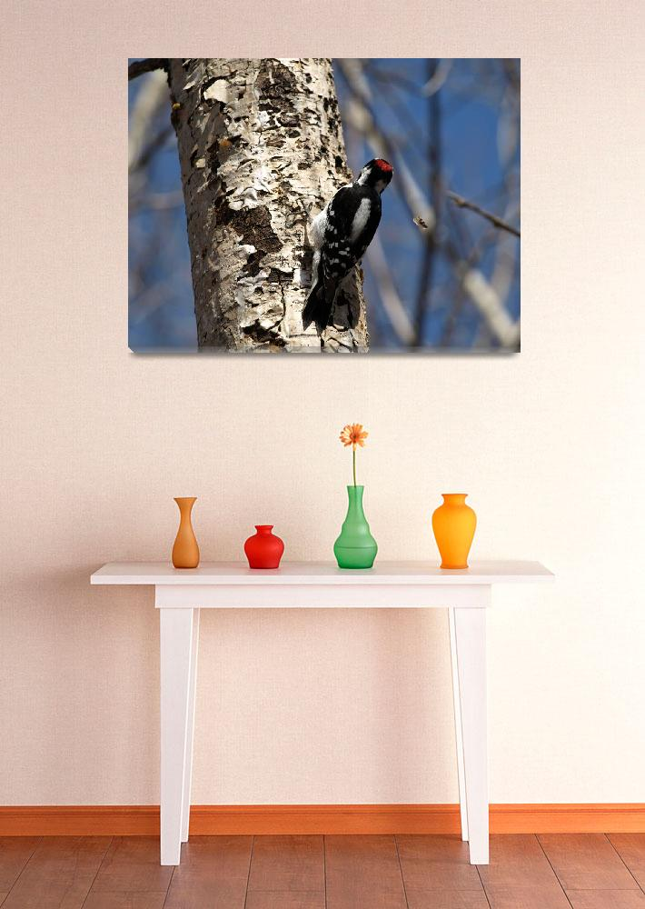"""woodpecker on tree&quot  (2008) by Albertphoto"
