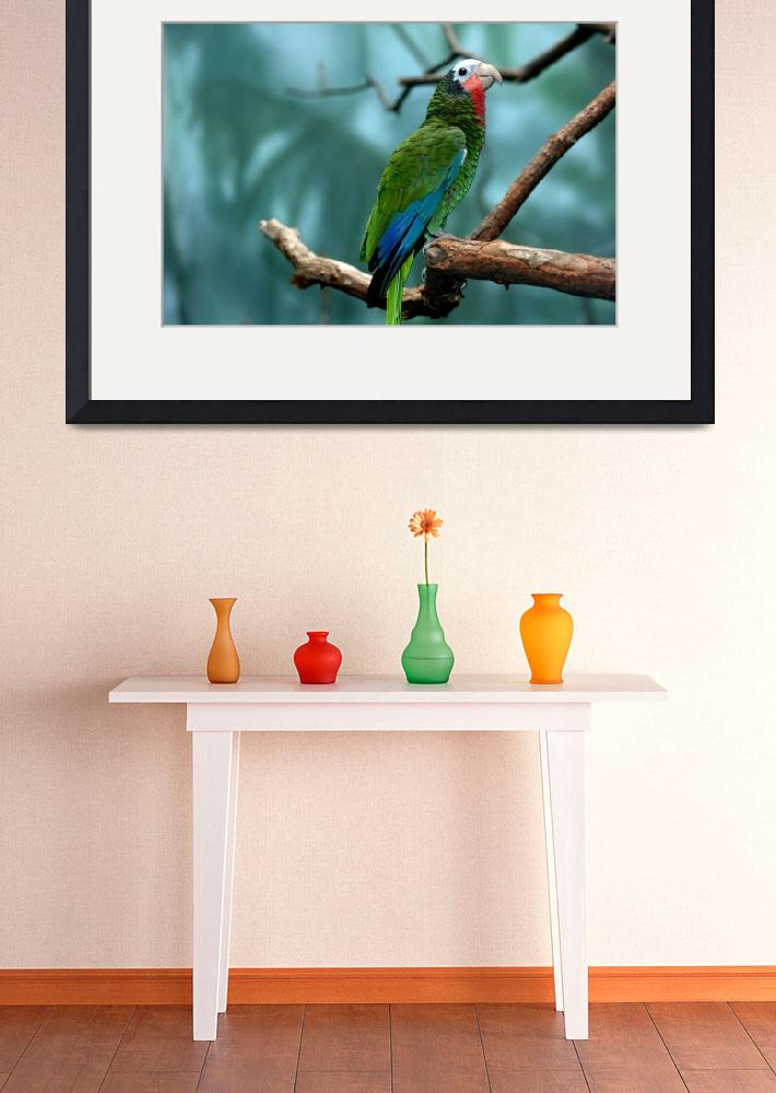 """Green with Blue Parrot&quot  (2007) by joepucci"