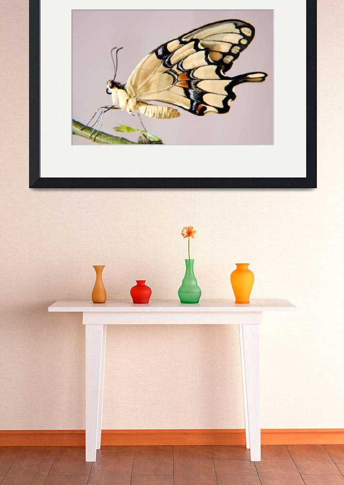 """Swallowtail Butterfly&quot  (2008) by JuliaHiebaum"