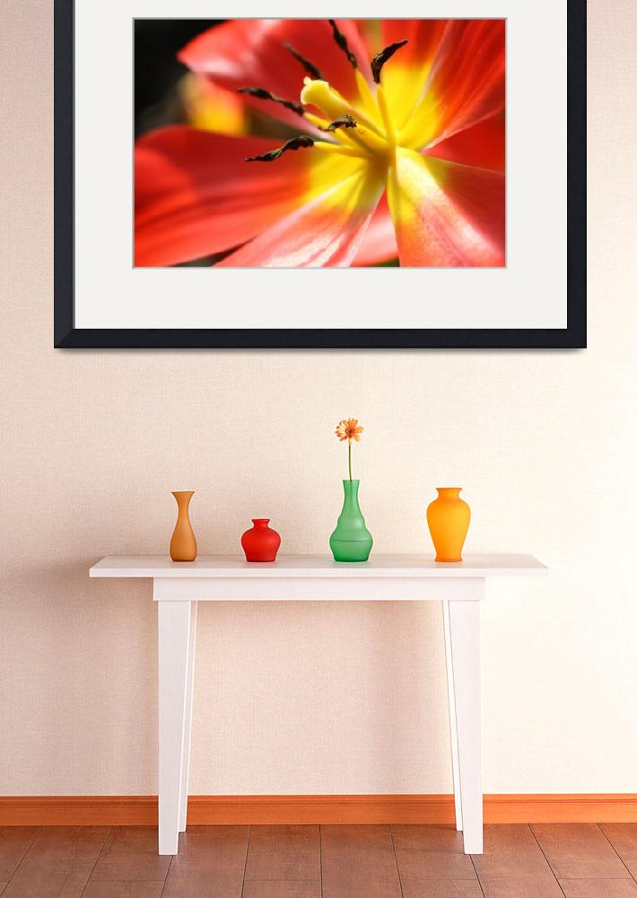 """Red and Yellow Tulip&quot  (2010) by studio-E"
