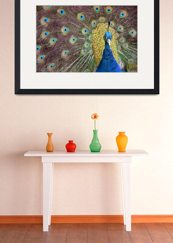 """Peacock Display II&quot  (2010) by LauraM"