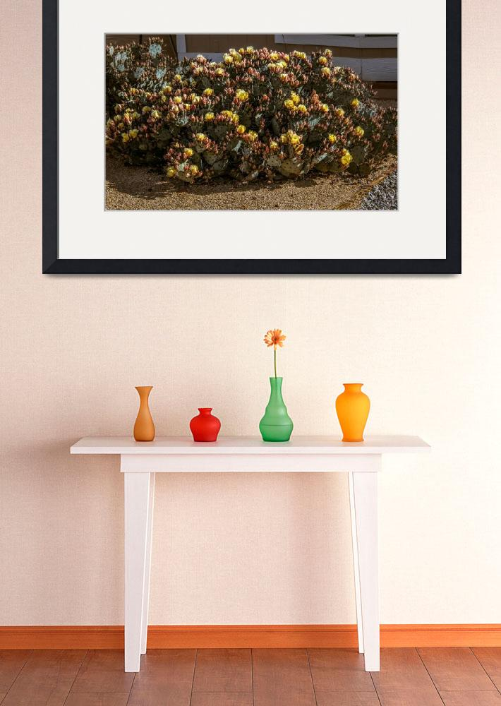 """Beautiful Yellow Pickly Pear Cactus&quot  (2015) by haybales"