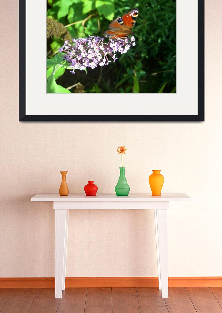 """Butterfly & Buddleia&quot  (2009) by InspiringImages"