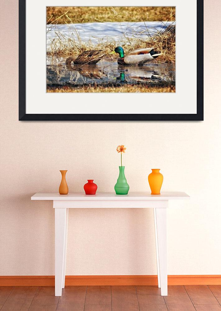 """Backyard Mallards&quot  (2013) by LJdesigns"