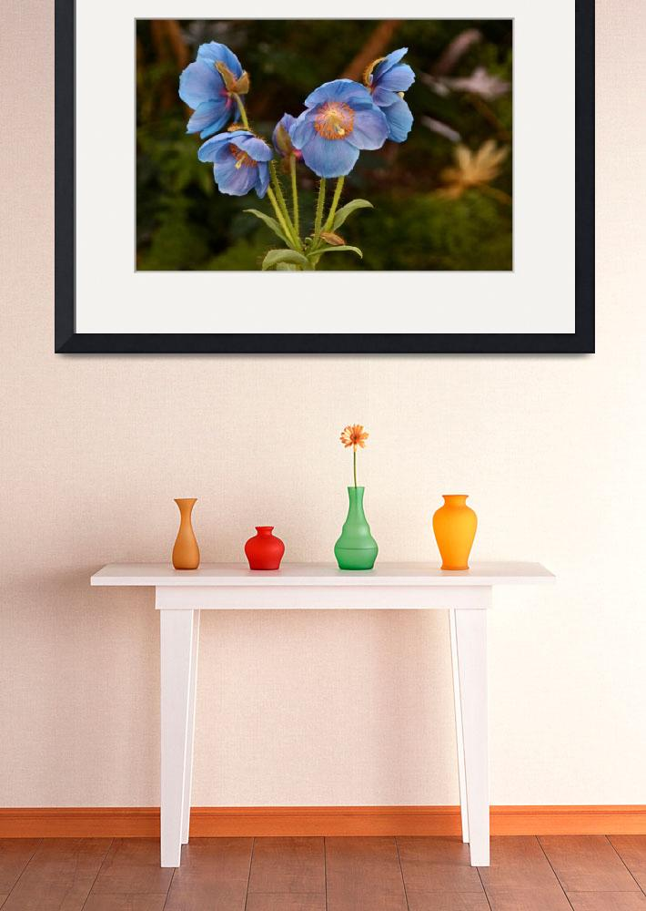"""Blue Poppy Splendor&quot  (2015) by LightHeart"