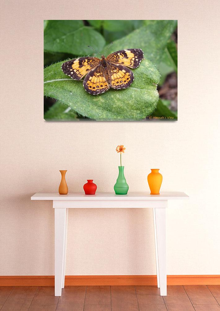 """Pearl Crescent Butterfly&quot  (2013) by hannahsview"
