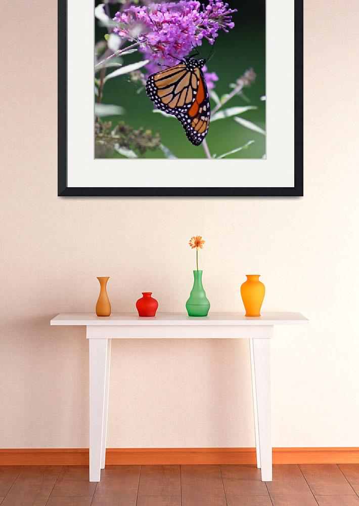 """Butterfly  Monarch on Butterfly Bush&quot  (2011) by KsWorldArt"