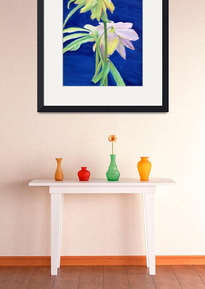 """hellebore&quot  (2007) by factorygallery"