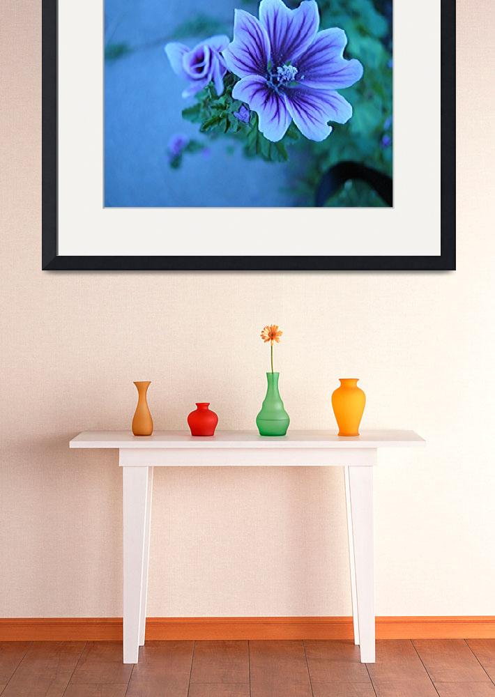 """Violet Colored Flower&quot  (2008) by willis-prints"