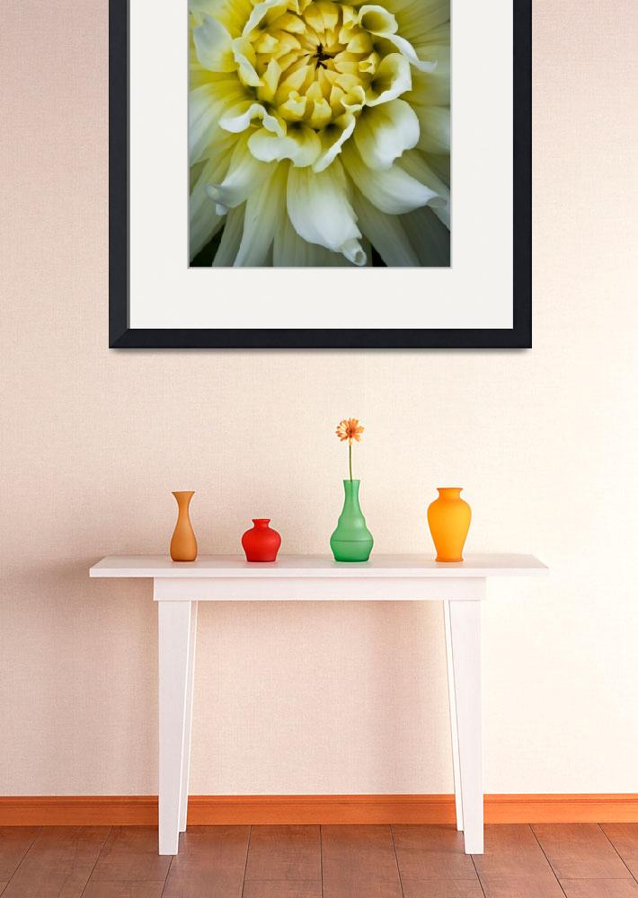 """White Dahlia&quot  (2011) by Inge-Johnsson"